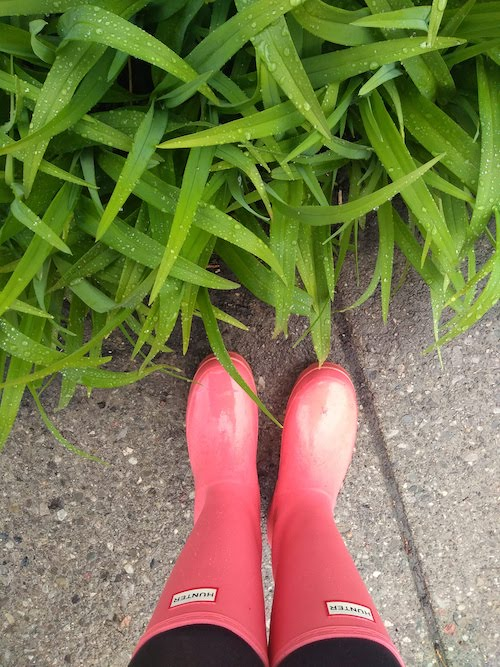 Green leaves beside a sidewalk. The leaves are wet. A pair of pink rainboots can be seen at the bottom of the image.